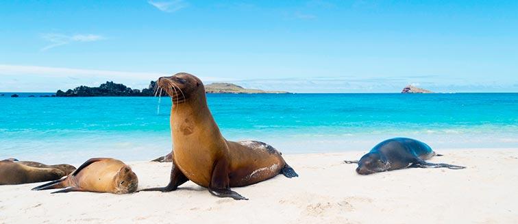 Galapagos Inslen