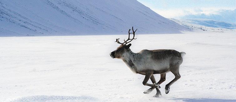Lappland: Kuusamo