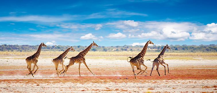 Die beste Zeit für eine Safari in Namibia