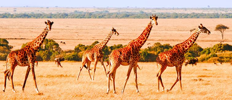 Samburu-Reservat