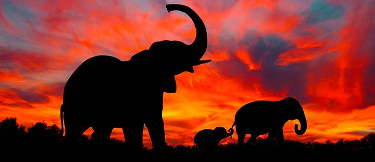 Tarangire-Nationalpark